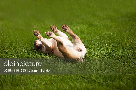 p045m1181833 by Jasmin Sander