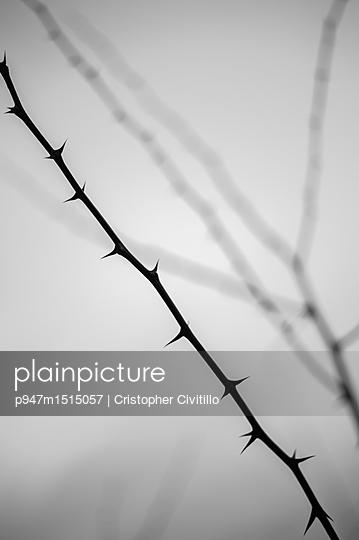 p947m1515057 by Cristopher Civitillo
