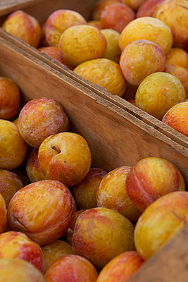 Crates of ripe plums - p92411224f by Jason Todd