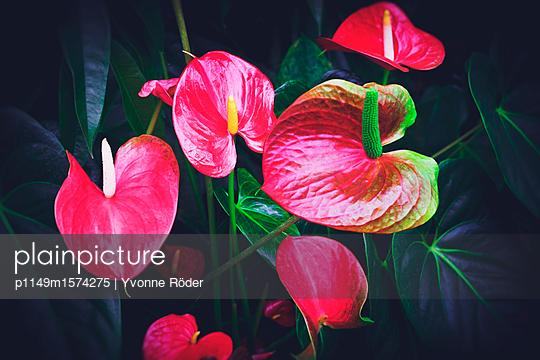 Flamingo flowers - p1149m1574275 by Yvonne Röder
