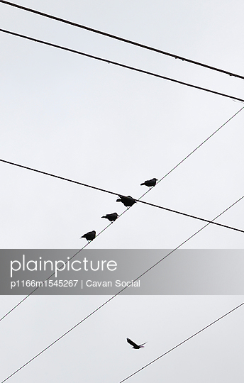 p1166m1545267 von Cavan Social