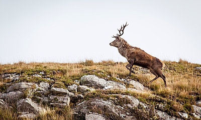 Deer - p1234m1044581 by mathias janke