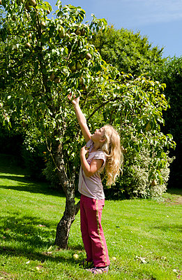 Apple tree - p1132m1016315 by Mischa Keijser