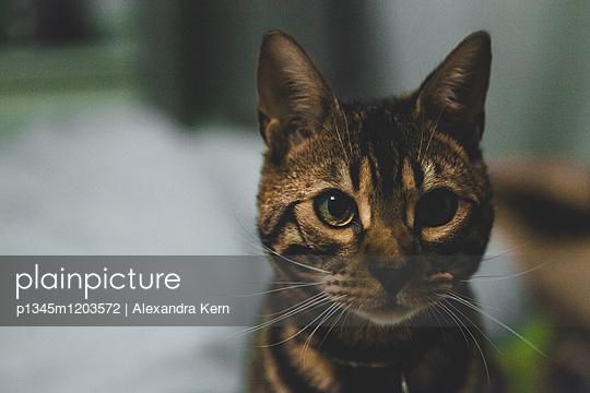 p1345m1203572 by Alexandra Kern