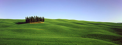 Orcia valley in spring - p4298146 by Fabio Muzzi