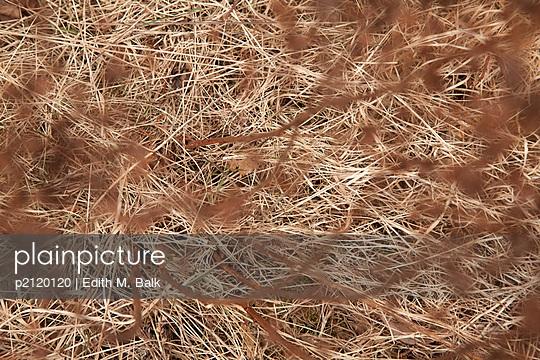 Gestrüpp - p2120120 von Edith M Balk