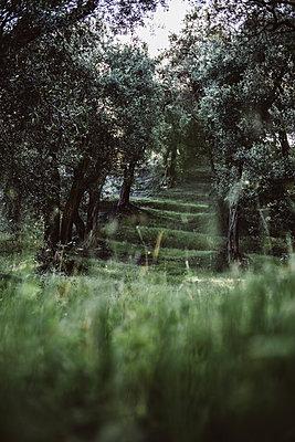 Olivenhain, Korfu - p1326m2160888 von kemai