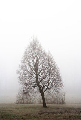 Austria, Mondsee, bare tree in morning mist - p300m998927f by Wolfgang Weinhäupl