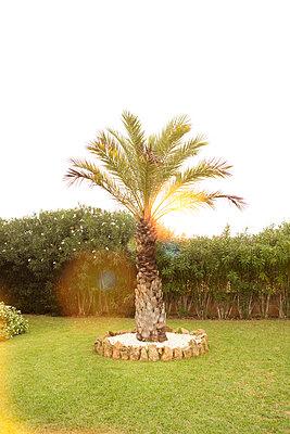 Mediterranean   - p454m1531889 by Lubitz + Dorner