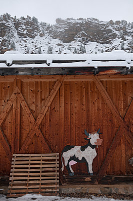 Cow stable - p470m1110912 by Ingrid Michel