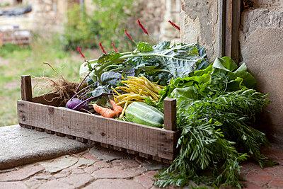 Vegetables - p948m716212 by Sibylle Pietrek