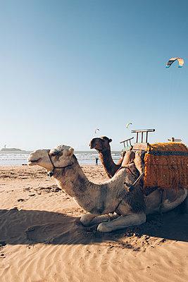 Essaouira - p1507m2043479 by Emma Grann