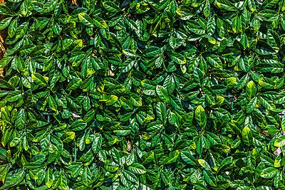 Grüne künstliche Hecke - p248m2107573 von BY
