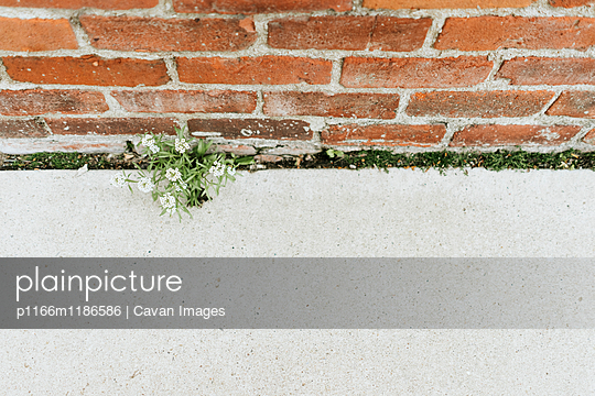 High angle view of flowers growing against brick wall