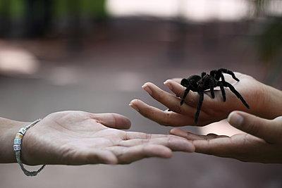 The black spider - p1063m1132346 by Ekaterina Vasilyeva