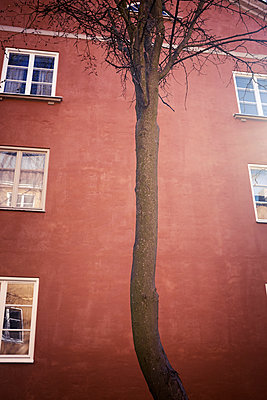 Tree in front of building - p312m1187780 by Dan Lepp