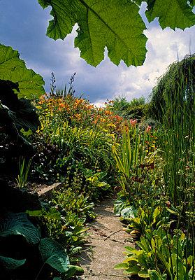 The Pond Garden, Talbot Gardens, Malahide, Co Dublin, Ireland - p4424964f by Design Pics