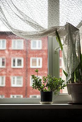 Windowpane - p971m952336 by Reilika Landen