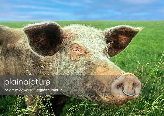 Happy pig - p1275m2254116 by cgimanufaktur