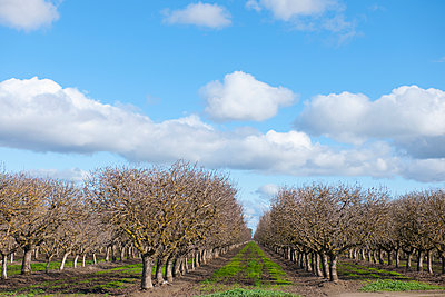 Trees in orchard - p555m1452979 by Spaces Images