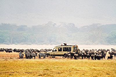 Safari - p3228788 von Simo Vunneli