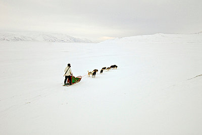 person on dog sled - p8475055 by Henrik Witt