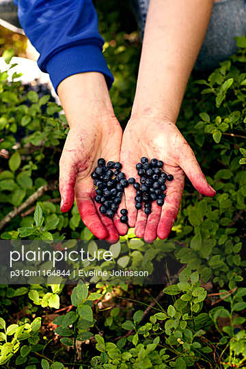 p312m1164844 von Eveline Johnsson
