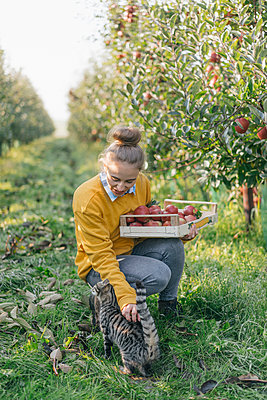 Young woman with crate and cat in apple orchard - p300m1205388 by Kniel Synnatzschke