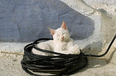Katze auf Santorini - p3300470 von Harald Braun