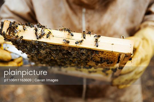 p1166m1163609 von Cavan Images