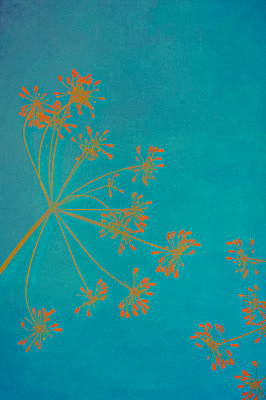 Computer generated abstract dried dill flower head with seeds on blue background - p1047m2289813 by Sally Mundy