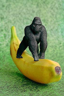 Gorilla auf Banane - p1210m1110496 von Ono Ludwig