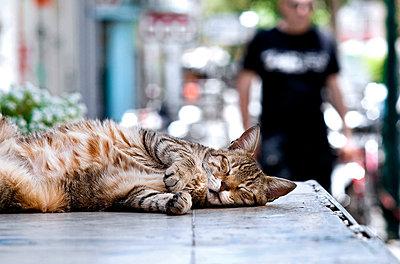 Cat sleeping in the shadow - p2740174 by Stephan Elsemann