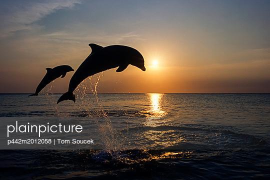 p442m2012058 von Tom Soucek
