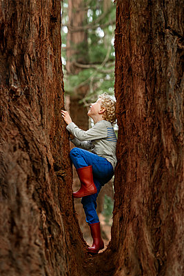 Preschooler climbing a redwood tree in New Zealand - p1166m2162775 by Cavan Images