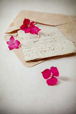 Hydrangea flowers on old letter - p1248m2193190 by miguel sobreira