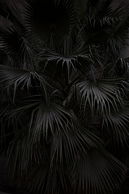 Palm tree at twilight - p1325m1333052 by Antje Solveig