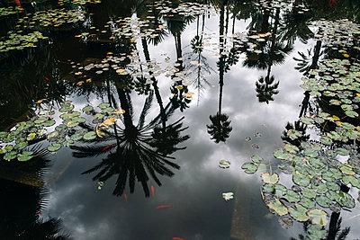 Jardin Majorelle - p1507m2043486 by Emma Grann
