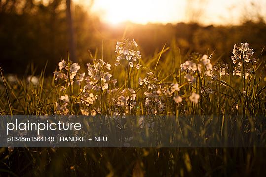 Sommerwiese - p1348m1564149 von HANDKE + NEU