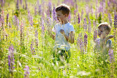 Brothers exploring and playing in meadows - p429m2145764 by Tiina & Geir