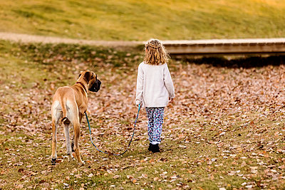 A little girl walking her Great Dane dog in a city dog park on a warm fall night; Edmonton, Alberta, Canada - p442m2012173 by LJM Photo