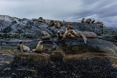 Seals - p741m2065655 by Christof Mattes