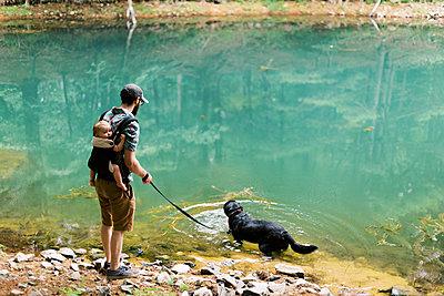 Black Labrador going for a little swim. - p1166m2151847 by Cavan Images