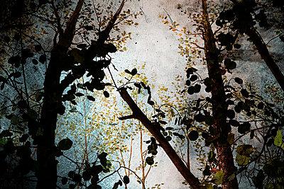 Aeste und Baumkrone - p9793216 von Luther photography