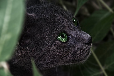 Grey cat with green eyes  - p1445m2125934 by Eugenia Kyriakopoulou