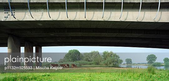 Cows underneath motorway - p1132m925593 by Mischa Keijser