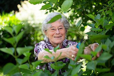 Ältere Frau schneidet mit der Gartenschere - p1221m1585956 von Frank Lothar Lange