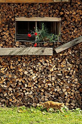 Austria, Salzburg State, Filsmoos, Pongau, alpine cabin, lumberyard and cat - p300m911278f by Hans Huber