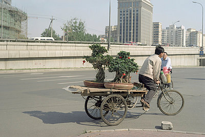 Transporting bonsais - p6060492 by Iris Friedrich