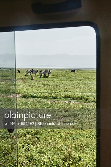 Ausblick aus dem Fenster während einer Safari - p1146m1584392 von Stephanie Uhlenbrock